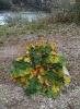 Blätter und Äste_2